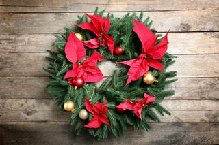 Poinsettias, a red flower originally from Mexico, are commonly used as to decorate Christmas wreaths.