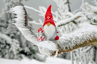 Christmas Elf on Snowy Branch