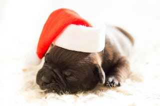 Sleeping Christmas Puppy in Hat