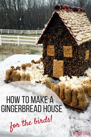 Bird seed gingerbread house (image via Wilder Child).